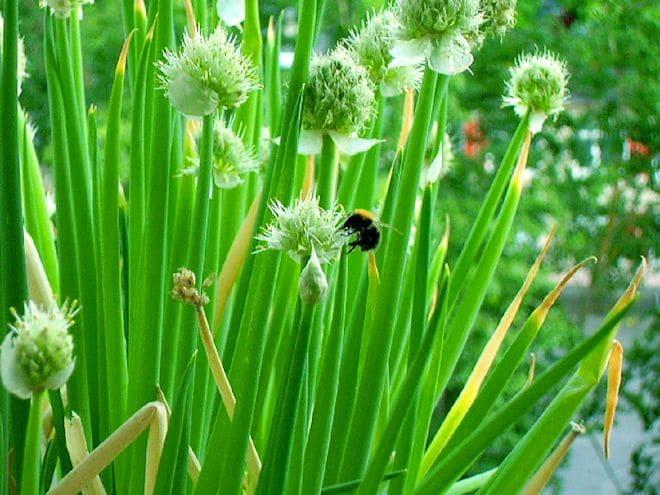 цветы и пчела