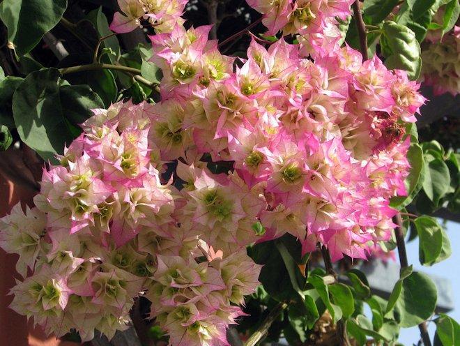 цвететы