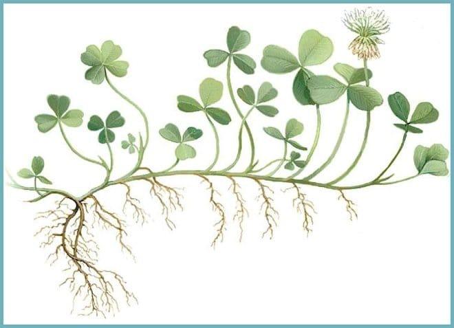 размножаться вегетативным