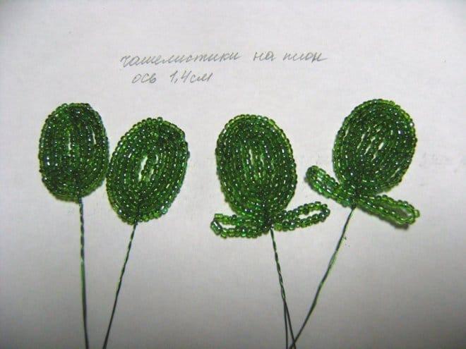 формирование чашелистников зеленого цвета
