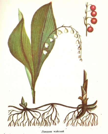 деление корней
